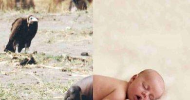 Dziecko i sęp
